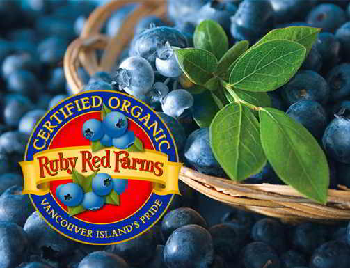 Ruby Red Certified Organic Blueberry Farm
