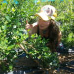 APPRENTICESHIP: PORT ALBERNI, BC – Avalon Organic Blueberry Farm, Farm Manager Apprentice