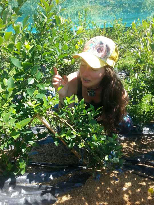Avalon Organic Blueberry Farm