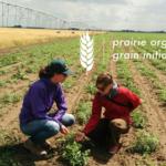 Job: Organic Grain Program Coordinator