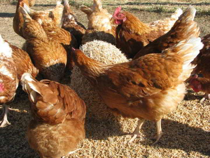Blackbird Organics