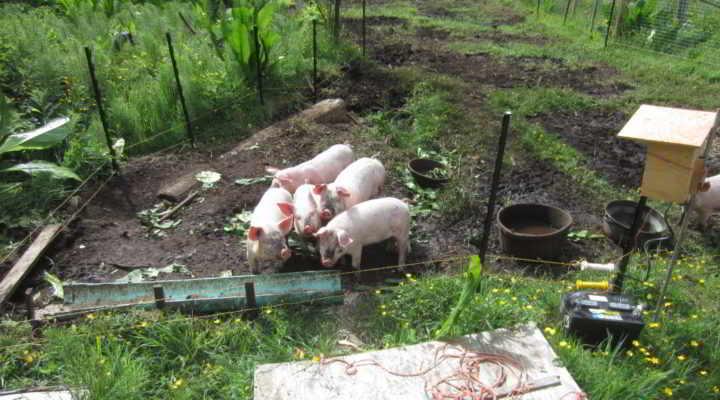 Mossy Banks Farm