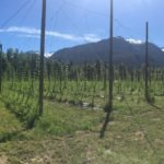 LEASED: Land for lease on hop farm, Squamish BC