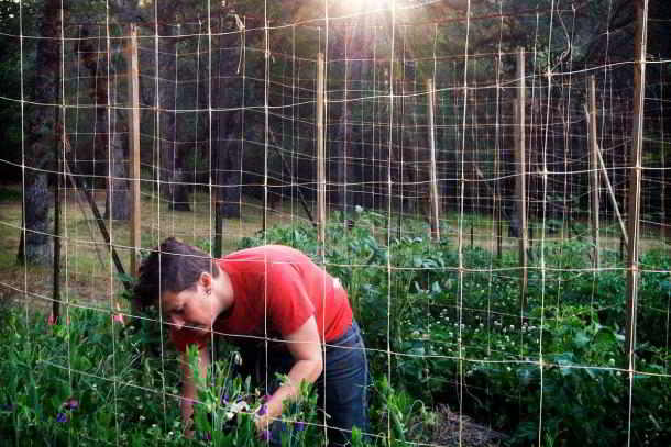 Ecological Farming