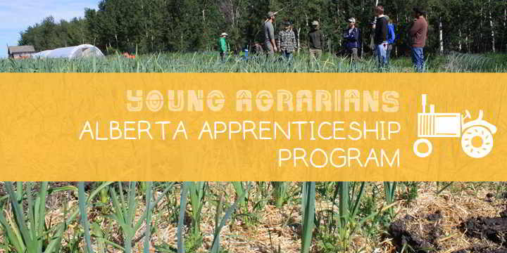 Apprenticeship-Young-Agrarians-Steel-Pony-Farm