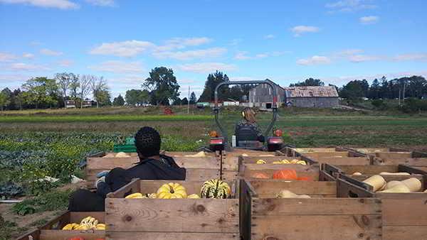 Ignatius Farm Job