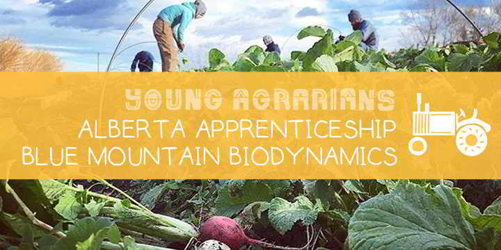 Apprenticeship-Young-Agrarians-Blue-Mountain-Biodynamic-2