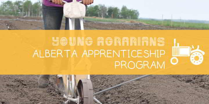 Apprenticeship-Young-Agrarians-Homestead