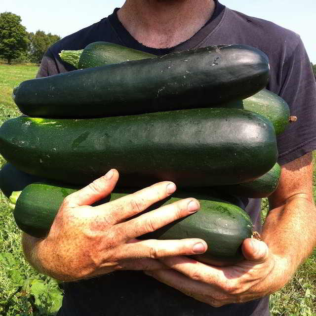 Young Agrarian Scott holds an green armful of zucchini