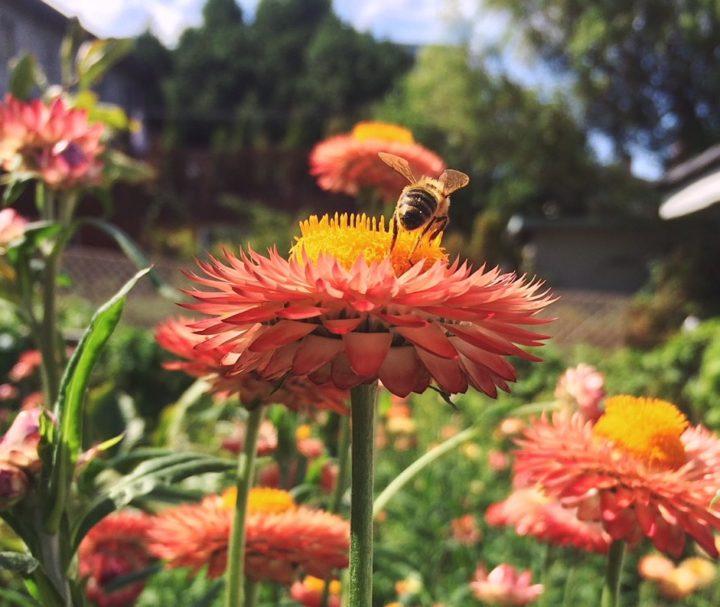 City BEet Farm Bee Break