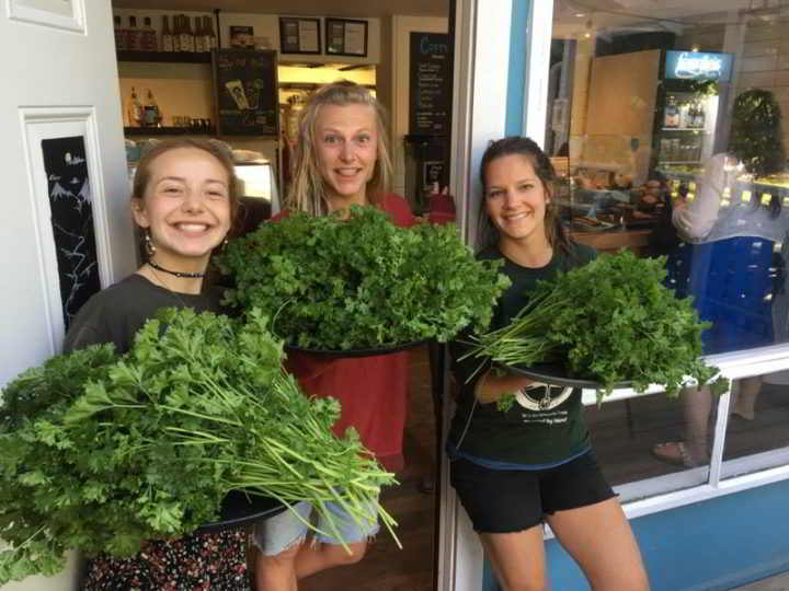 Solscapes Restaurant Harvest