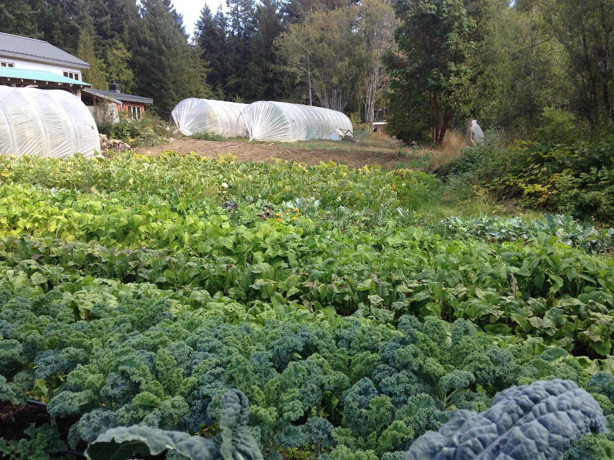 Two Roads Farm Brassicas