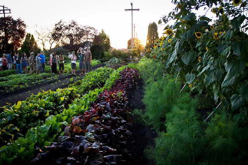 Vancouver Urban Farming Society job program manager 2018
