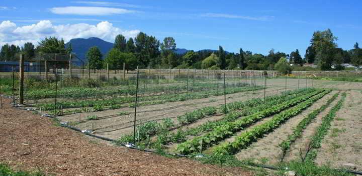 Cowichan Incubator Seed Farm