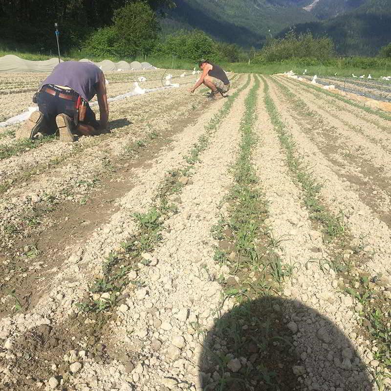Laughing Crow Organics farm job