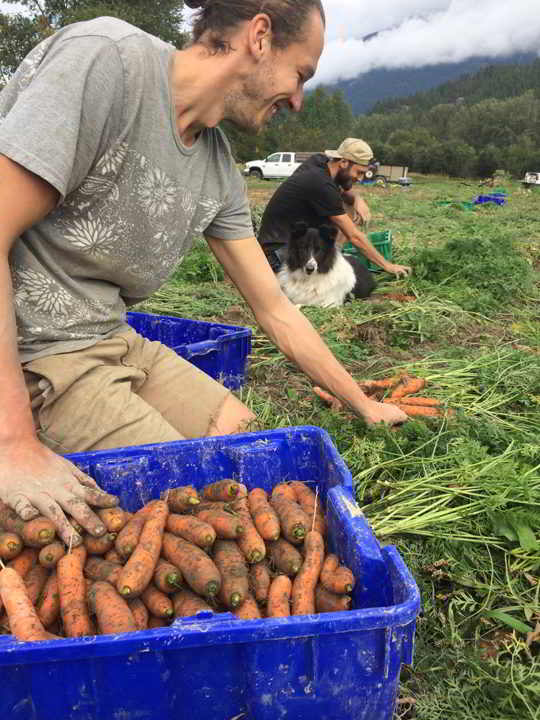 Laughing Crow Organics farm job