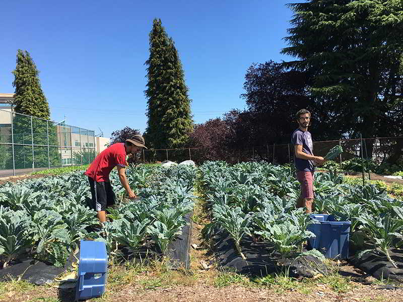 Fresh Roots Farm Job