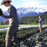 FARM JOB: PEMBERTON, BC – Plenty Wild Farms 2018