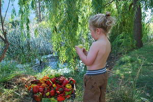 One Love Farm