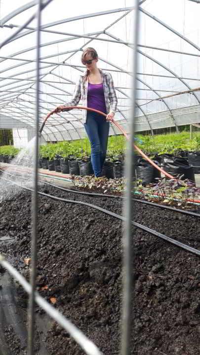 Dancing Dandelion Business mentorship farmer Watering seedlings