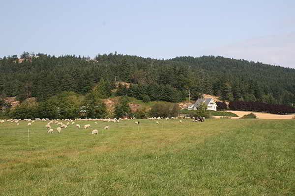 Parry Bay Sheep Farm