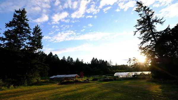 Three Oaks Farm