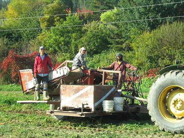 West Enderby Farm carrot harvest
