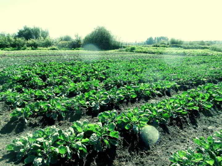 Sweet Digz Farmer Fields