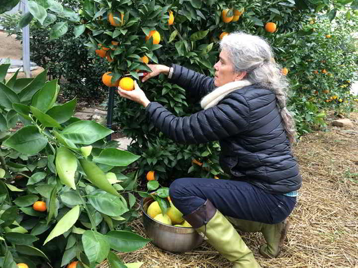 Grow Oranges in BC! Greenhouse Design Workshop