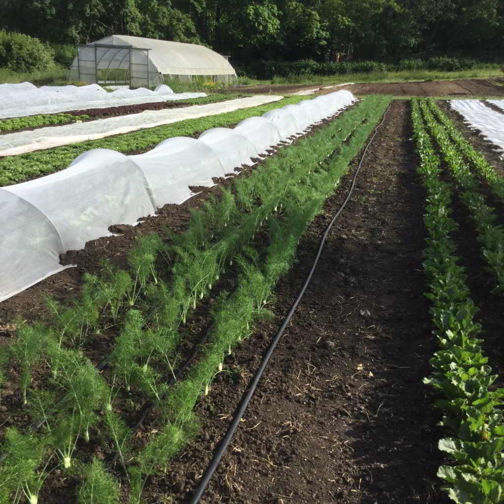 Square Root Farm