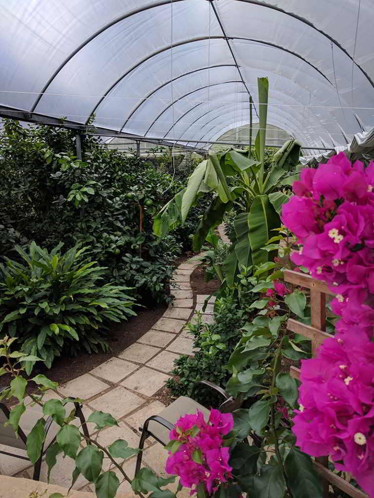 Grow Oranges in BC! Greenhouse Design Workshop