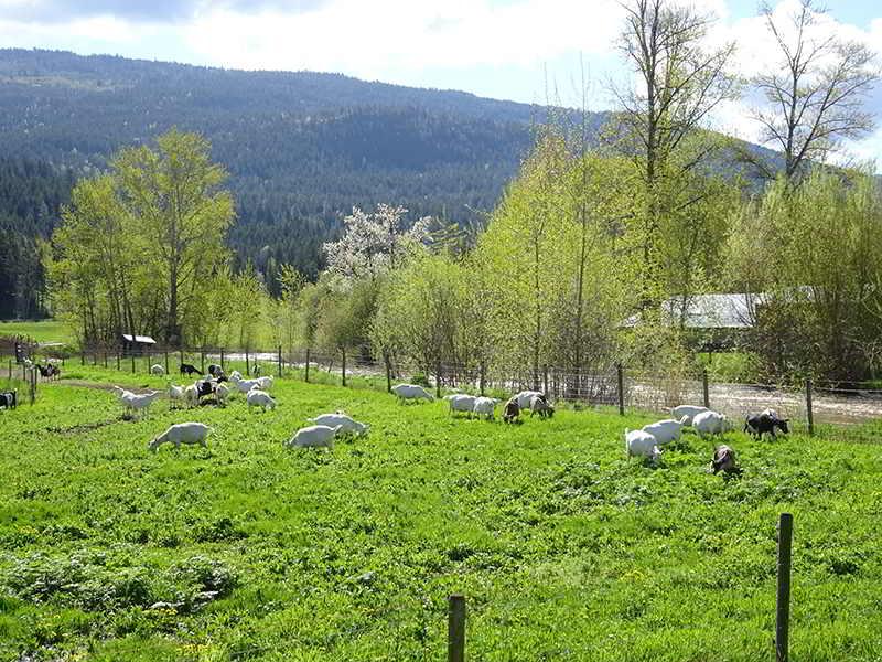Hillside Dreams Goat Dairy