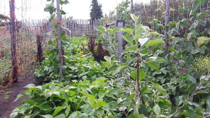 farm-land-alberta-camrose-1