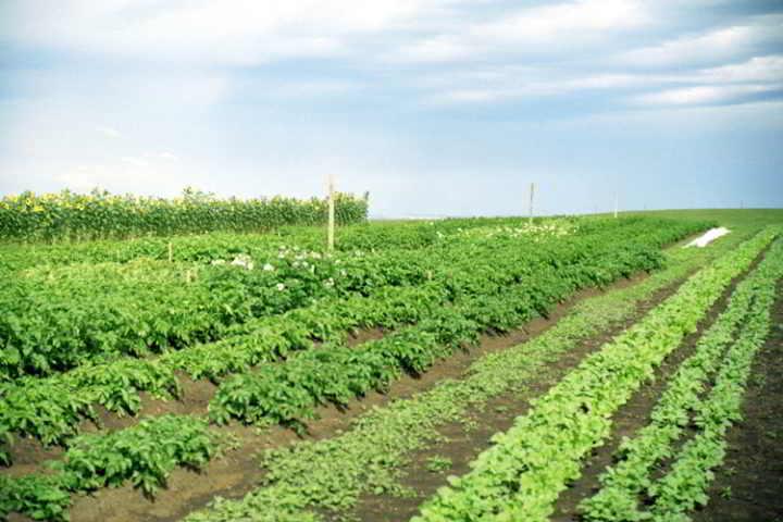 farm-land-alberta-camrose-2