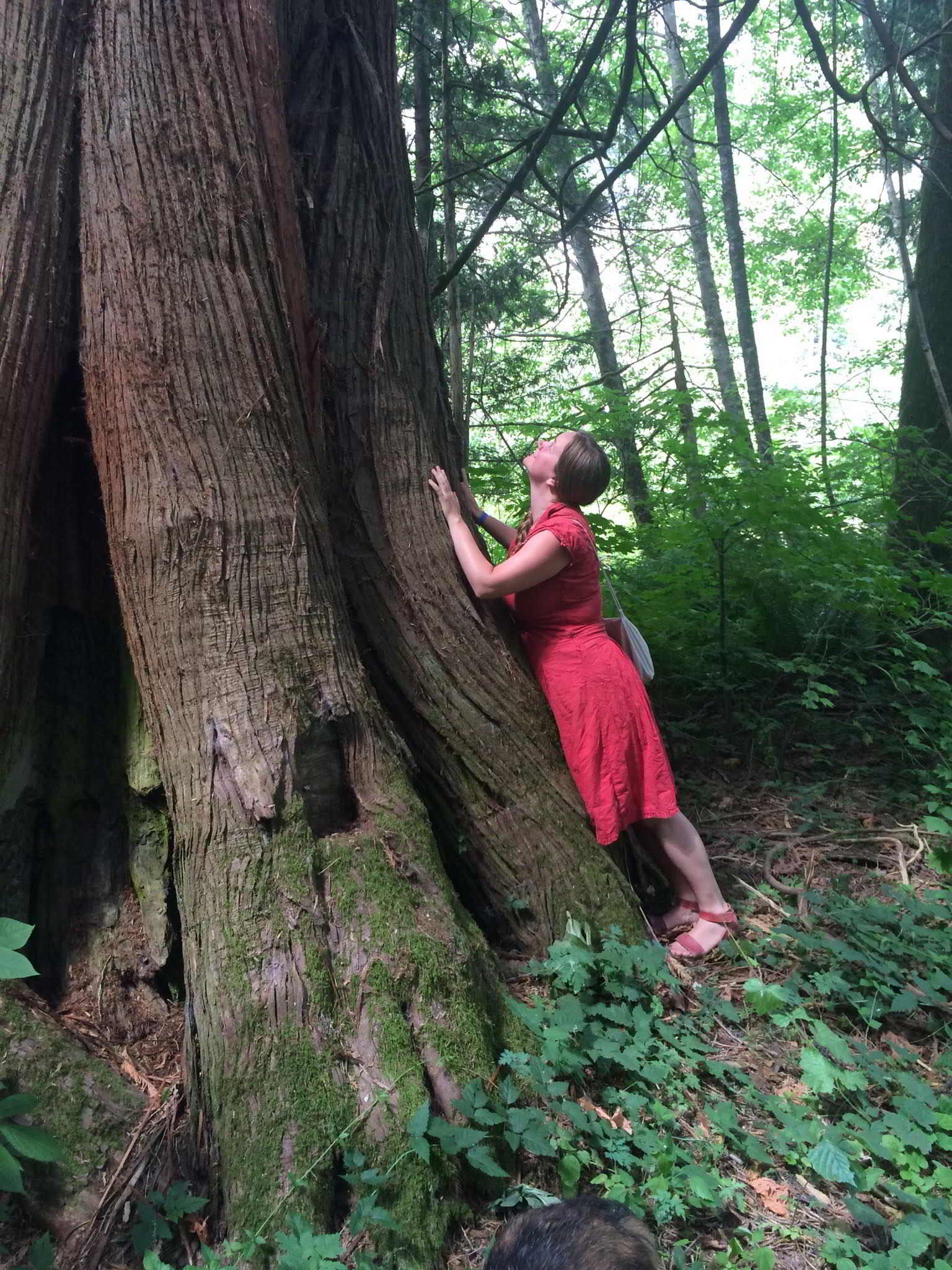 Earthwise Society Farm in Agassiz - tree hug