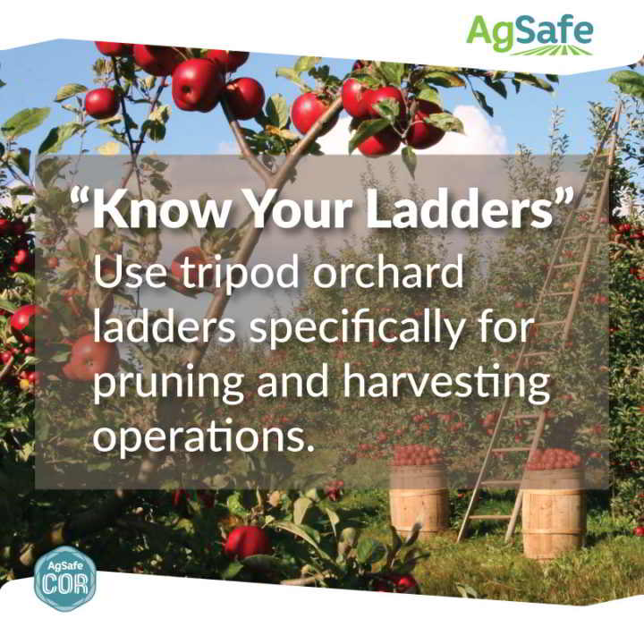 Ladder Safety AgSafe