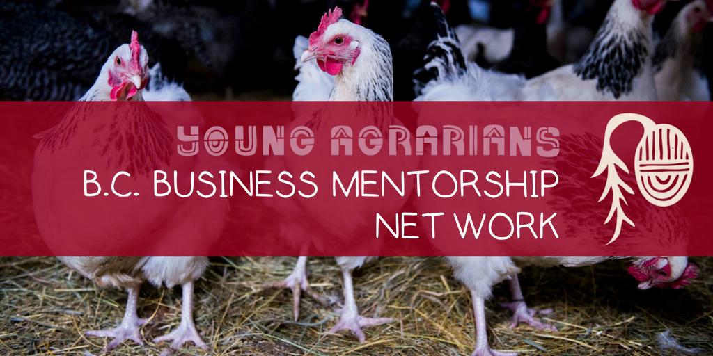 Business Mentorship Network