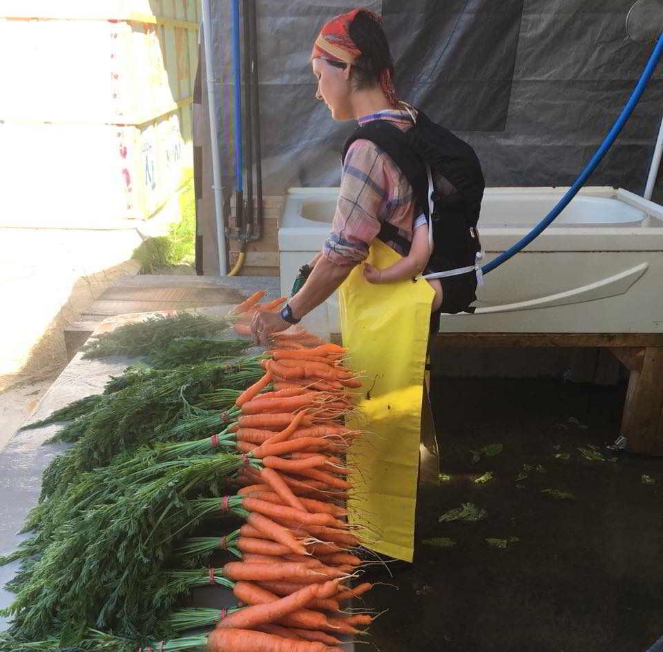 Tatlo Road Farm Nikki with baby washing carrots