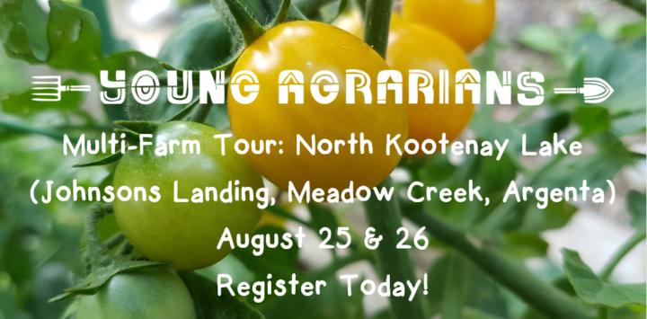 NKL-Tomatoes-Info-8