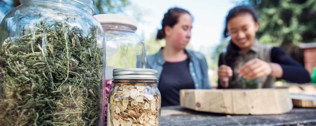 UBC Farm Workshops Dried Medicine - by Jaylin Chiyi