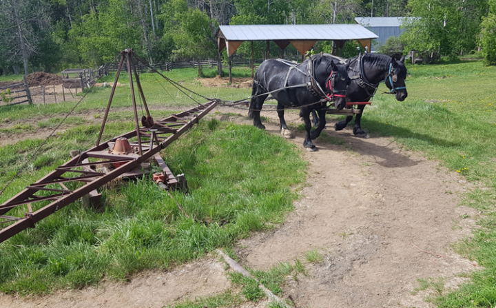 Young-Agrarians-Wildwood-Farm-Tour-2