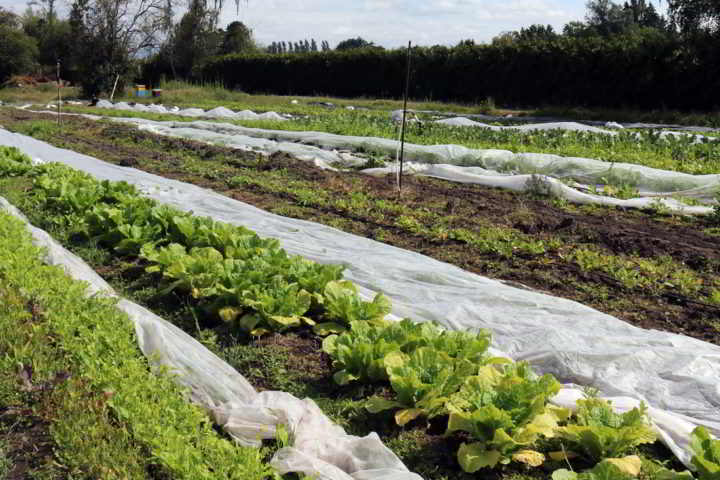 1 acre farm richmond bc