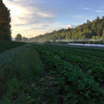 The Agrariannaire: Meet the Farmers at Close to Home Organics