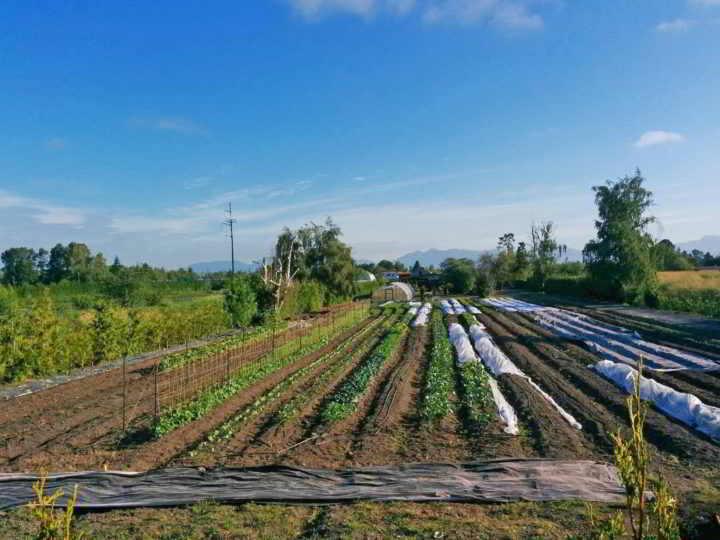 farm business for sale