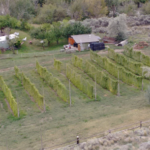 Land Opportunity: 10 Acre Hop Farm, Ashcroft B.C.