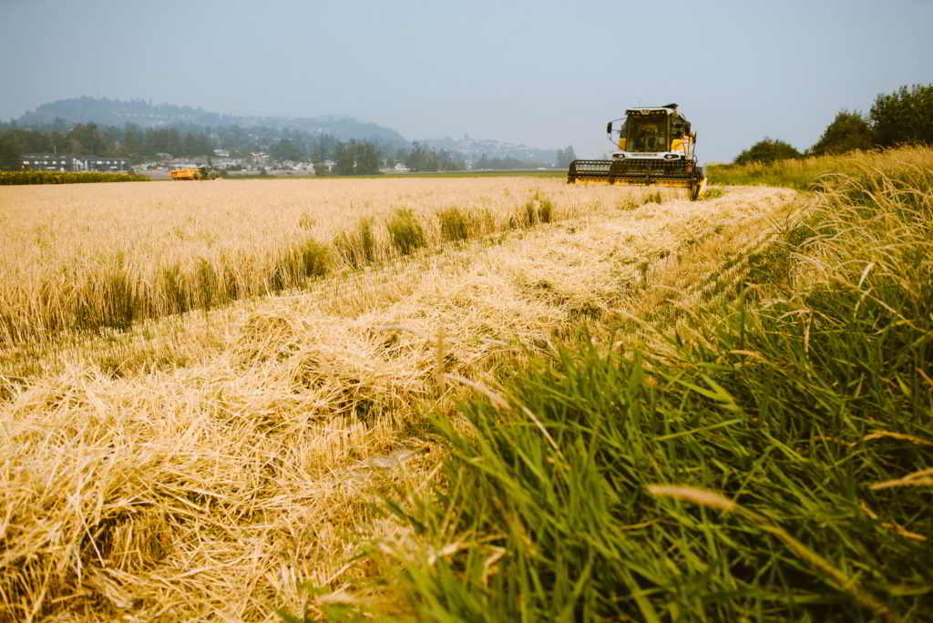Field House Farms harvesting grain