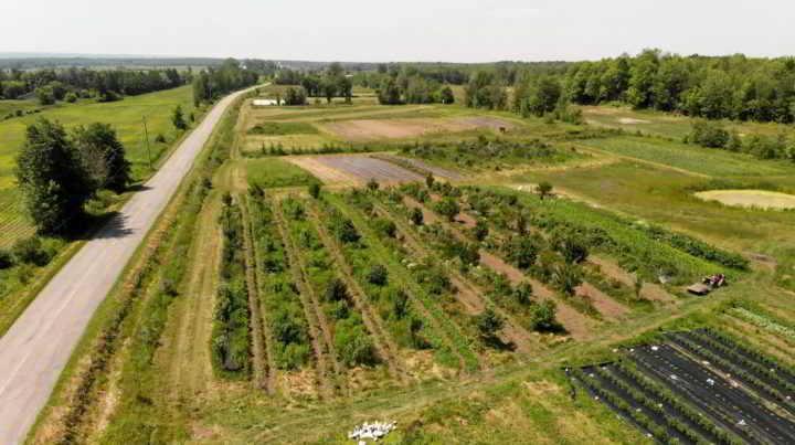 Regeneration Canada - Jardins d'ambroisie