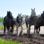 FARM RESIDENCY: POUCE COUPE, BC – Wildwood Farm