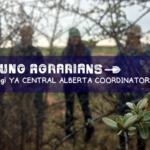 JOB: Young Agrarians Central Alberta Coordinator