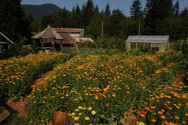 Kinsol Valley Farm